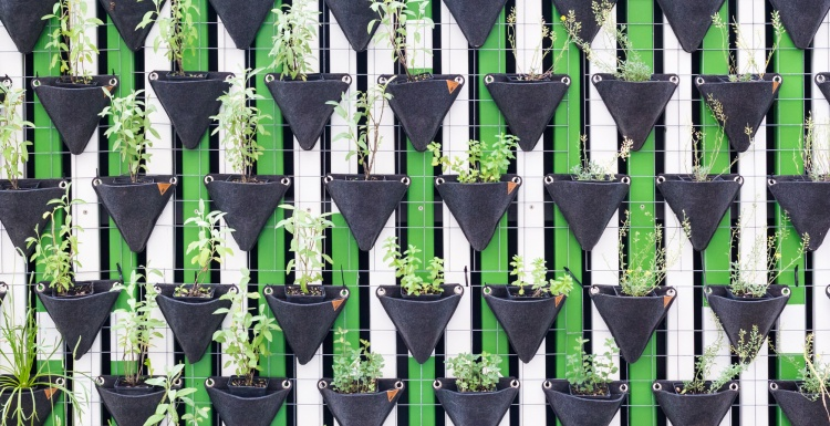 Photo: Carrefour announces its first vertical garden at...