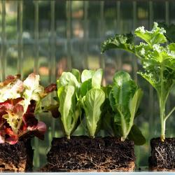 Thumbnail-Photo: Retailers growing produce in automated farms...