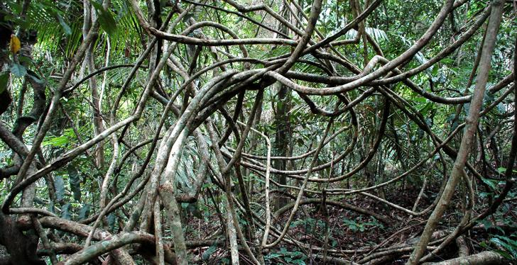 Twisted trunks and branches in the forest