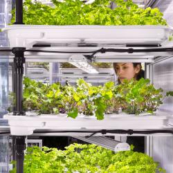 Thumbnail-Photo: In-store farming: growing parsley inside the supermarket...
