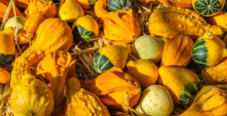 Many yellow pumpkins with different shapes; copyright: Alexander...